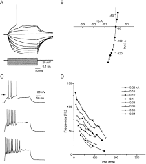 component is time constant articles journal of neurophysiology