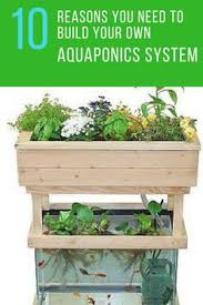 Build Your Own Indoor Garden - hi tech indoor garden uses aquaponics to grow a salad a day