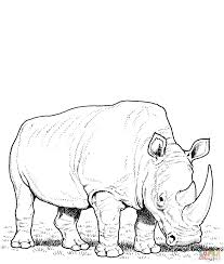 rhino coloring pages free coloring pages