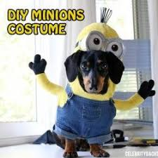 Small Dog Halloween Costumes Ideas 69 Dog Costumes Images Animals Puppies
