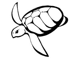 free printable sea turtle coloring pages kids mewarnai