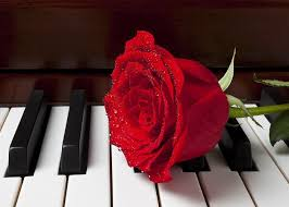 red rose on piano greeting card for sale by garry