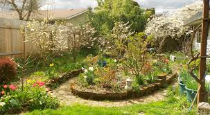Planting Fruit Trees In Backyard Backyard Orchard For The Yard S Pinterest Orchards