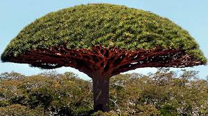 25 extremely strange looking trees