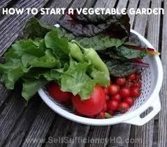 starting a garden the easy way starting a garden doesn u0027t need to