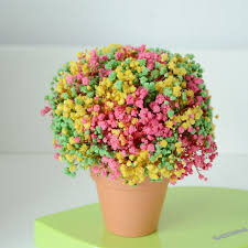 s day gift from baby eternal baby s breath of the colored birthday gift s
