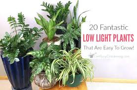small low light plants indoor low light plants houseplant low light throughout best low