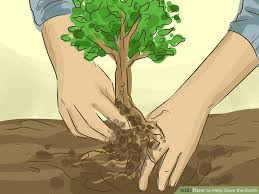 How To Save A Dying Plant Simple Ways To Help Save The Earth Wikihow