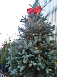 o christmas tree o christmas tree u2026 u201d u2022 fort collins nursery