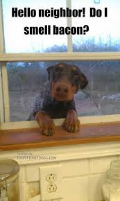 Dog Cooking Meme - hello neighbor do you have any friendly neighborhood dogs who