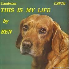 dog photo albums 118 best zany album covers images on cover lp