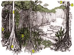 Dominant Plants Of The Tropical Rainforest - plant adaptations