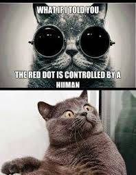 Morpheus Cat Meme - morpheus cat the red dot funny pics memes captioned