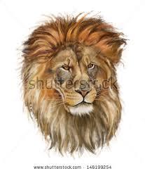 lion drawing color qjkrev