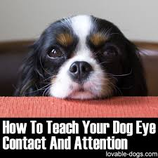 Pin by Charles Reed on Lovable Dogs Pinterest