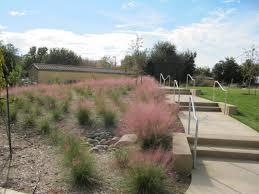 sacramento native plants drought resources uc davis arboretum u0026 public garden