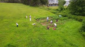 an aerial shot of a family tending their vegetable garden in a