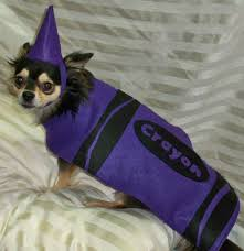 crayons halloween costume running with a glue gun dog and cat costume edition of special