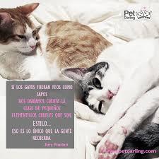 imagenes de gatitos sin frases frases celebres sobre gatos parte 1