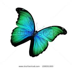 Blue And Green Butterfly - green and black butterfly stock images royalty free images