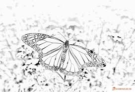 butterfly coloring pages print or download for free
