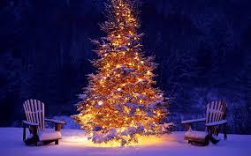 winter christmas eve winter time tree magic merry snow snowy xmas