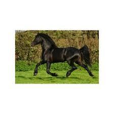 sous cheval bureau sous cheval dans divers achetez au meilleur prix avec
