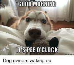Memes O - good morning its pee o clock memes com dog owners waking up dank