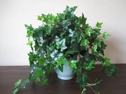 large silk plant ivy decor greenery centerpiece home accent