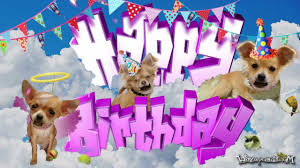 happy birthday chihuahua for