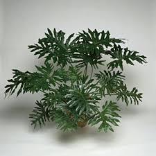 10 indestructible houseplants plants houseplants and common