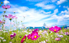 free flower wallpapers 1080p long wallpapers