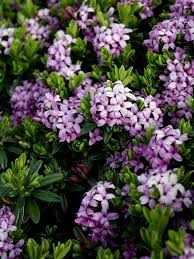 best 25 purple flowering plants ideas on pinterest purple