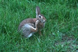 backyard rabbit with bird store kde org