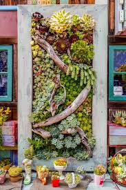 35 succulent gardening ideas for small creative container designs