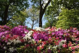 little known london secret gardens in bloom