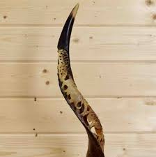 horns for sale kudu horn 35 sw8898 for sale at safariworks taxidermy sales
