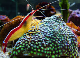 marine fish export live ornamental exporter invertebrates