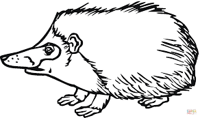 hedgehog 4 coloring page free printable coloring pages
