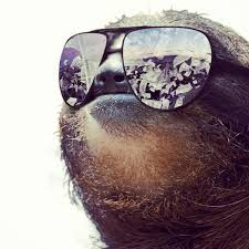 Funny Sloths Memes - sloth meme funny sloth images and dirty sloth memes