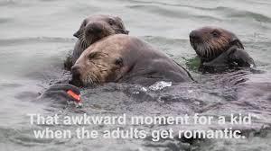 Sea Otter Meme - otter memes aquarium of the pacific blog youtube