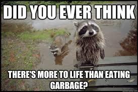 Funny Raccoon Meme - it s raccoon time i can has cheezburger
