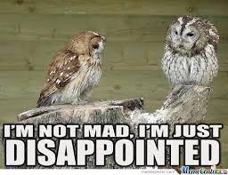 Funny Owl Meme - meme center largest creative humor community funny owl