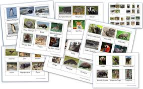 animals around the world montessori 3 part cards homeschool den