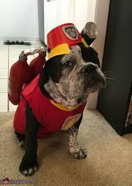 Dog Halloween Costume Ideas 268 Costume Ideas Pets Images Costume