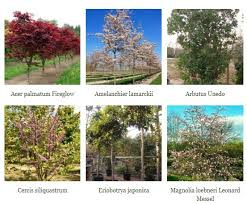 top 10 trees for smaller gardens practicality brown esi