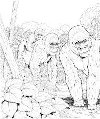 trend gorilla coloring pages pefect color book 8755 unknown