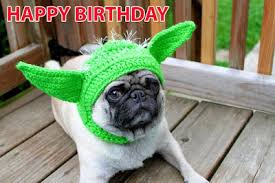 Birthday Meme Dog - top 30 cute happy birthday meme dog birthday wishes quotes