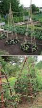 Growing Your Own Vegetable Garden by 22 Ways For Growing A Successful Vegetable Garden Amazing Diy