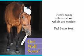 greeting cards equiworld ltd specialist equestrian retail and